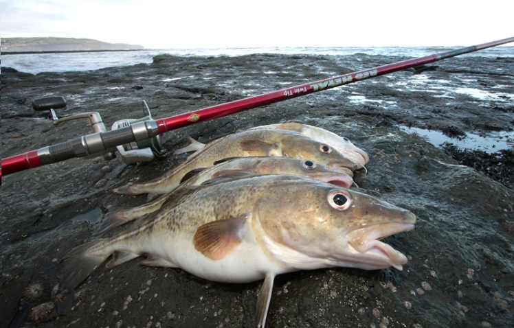 fishing-shore-long-continental-rods-0002__large-body