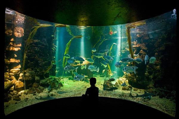 sea-zoo