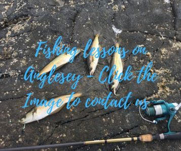Fishing lessons on Anglesey 2 - Click the image to contatc