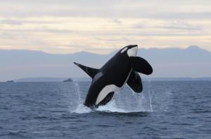 orca.ngsversion.1475776242241.adapt.1900.1