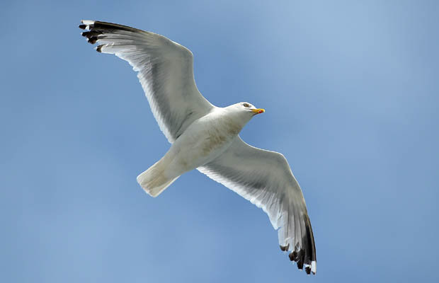 Seagull-459794