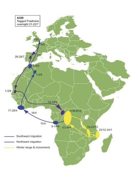 Swift map- brit aunithology