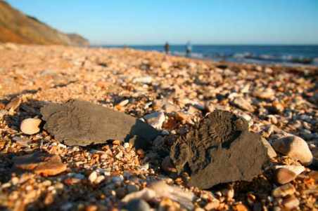 Fossils on charmouth beach, on the jurassic coast of Dorset.