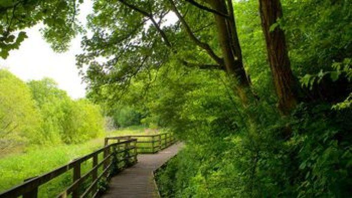 Expedia - Dingle nature reserve