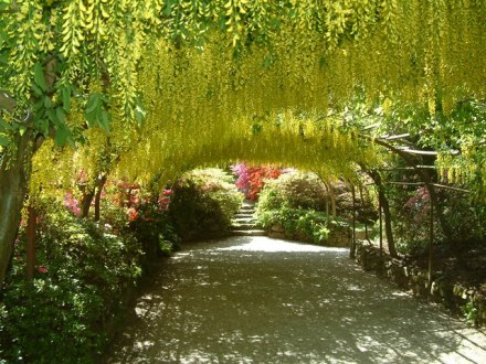 The_Laburnum_Arch_at_Bodnant_Garden_-_geograph.org.uk_-_207049