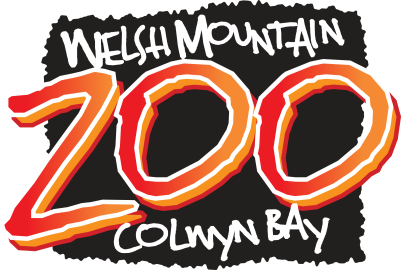 welsh mountin zoo