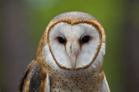 barn owl-barnowlbox.com
