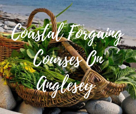 Coatal forgaing on Anglesey