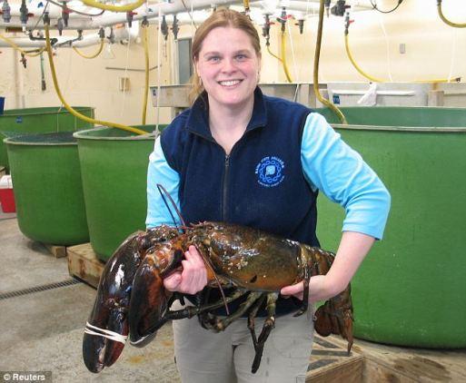 Huge lobster saved by aquarium
